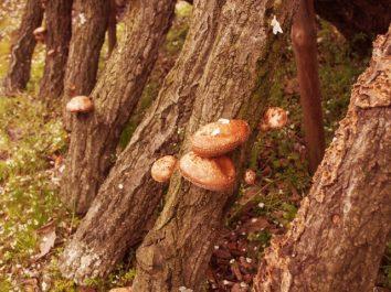 知多郡南知多町で椎茸の収穫、栽培準備のお仕事です♪パートタイム派遣◇san1414-kyo イメージ